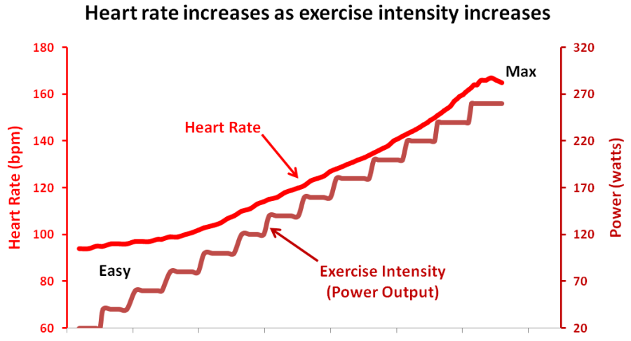 Why Do Pulse Rate Increase During Exercise